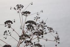 Slut upp av torkade bruna växter Arkivbild