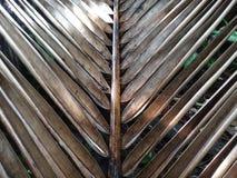 Slut upp av torkade kokosnötsidor i trädgården Arkivfoton