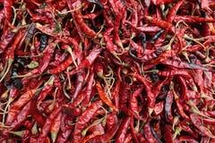 Slut upp av torkade röda chili royaltyfri foto