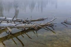 Slut upp av träd i vatten Royaltyfri Fotografi