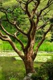 Slut upp av trädet i japanträdgård i Kyoto Arkivfoto