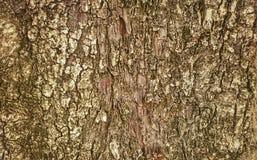 Slut upp av trädhud för textur och bakgrund Royaltyfri Bild