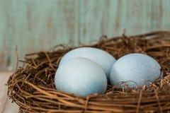 Slut upp av tre blåa påskägg i ett rede Royaltyfria Bilder