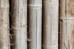 Slut upp av wood bakgrundstextur för bambu Selektivt fokusera fotografering för bildbyråer