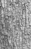 Slut upp av wood texturbakgrund i svartvitt arkivbild