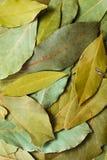 Slut upp bakgrundsskott av torr fjärd l för exotiskt växt- matbegrepp Royaltyfria Bilder