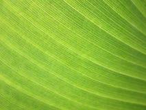 Slut upp bananbladbakgrund med linjer Arkivfoton