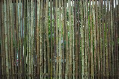 Slut upp dekorativt gammalt tr? av staketv?ggbakgrund arkivfoton