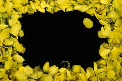 Slut upp den gula blomman för ramnatur på svart bakgrundswallpepertextur arkivfoton