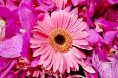 Slut upp den söta rosa Gerberablommablomningen med en frunch av florabuketten royaltyfri bild