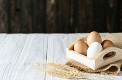 Slut upp det vita ägget, kopieringsutrymme royaltyfri foto