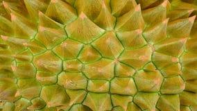 Slut upp durianen för bakgrund Royaltyfria Bilder