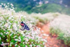 Slut upp fjäril på blomman Royaltyfri Bild