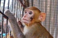 Slut upp fotoet av en ung brun apa arkivfoton