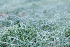 Slut upp fotoet av frostigt morgongräs royaltyfri fotografi