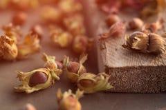 Slut upp fotosättning för sidosikt av precis skördade hela hasselnötter med skal på solnedgång på det lantliga träbrädet selektiv royaltyfria foton