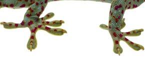 Slut upp geckobenet och fingrar på vit bakgrund royaltyfri bild