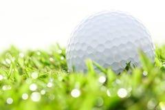 Slut upp golfboll på gräs Royaltyfri Bild