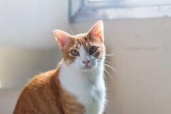 Slut upp grön synad katt arkivfoto