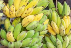 Slut upp grönt rått kultiverat banan- eller Pisang Awak banan- eller Kluai Namwa Musa sapientumLinn Musa ABB CV Kluai Namwa royaltyfri foto