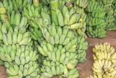 Slut upp grönt rått kultiverat banan- eller Pisang Awak banan- eller Kluai Namwa Musa sapientumLinn Musa ABB CV Kluai Namwa arkivfoto