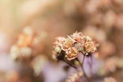 Slut upp härliga torkade blommor på ljus bakgrundssuddighet Arkivbild