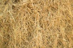 Slut upp hösugrörtextur, åkerbruk bakgrund Arkivbilder