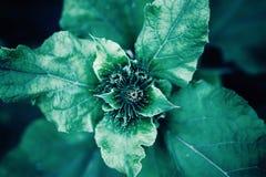 Slut upp kardborreväxten Abstrakt blom- moderiktig tonad mallmodellbakgrund Royaltyfria Foton
