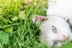 Slut upp kattöga på grönt gräs Arkivfoton