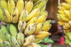 Slut upp kultiverat banan- eller Pisang Awak banan- eller Kluai Namwa Musa sapientumLinn Musa ABB CV Kluai Namwa arkivfoto