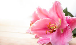Slut upp liljablomman på vit bakgrund Royaltyfria Bilder