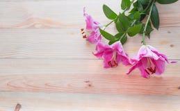 Slut upp liljablomman på wood bakgrund Arkivbild
