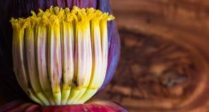 Slut upp makro av bananblomningmockan, blommor av den omogna bananen i träbakgrund med kopieringsutrymme för text arkivbilder