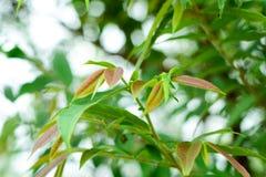Slut upp natursikt av det gröna bladet Royaltyfri Bild