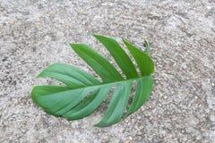 Slut upp nya gröna sidor på cementgolvbakgrunden royaltyfri bild