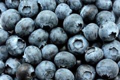Slut upp nya organiska valda blåbär Royaltyfria Bilder