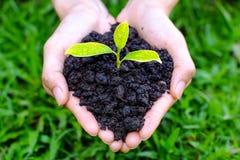 Slut upp på den mänskliga hållen för handgest lite som växer växten på bl Arkivfoton
