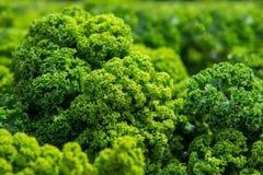 Slut upp på grönkål Gröna grönsaksidor, sunt äta, vegeta royaltyfri bild