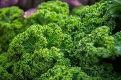 Slut upp på grönkål Gröna grönsaksidor, sunt äta, vegeta arkivfoton