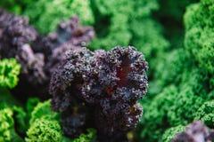 Slut upp på grönkål purpurfärgade grönsaksidor, sunt äta, vege royaltyfri bild