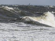 Slut upp på kust- vawe Royaltyfria Foton