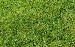 Slut upp på nytt grönt gräs Royaltyfria Foton
