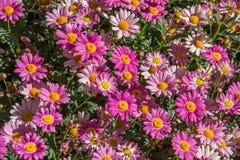 Slut upp på små blommor royaltyfri fotografi