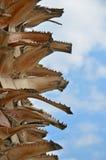 Slut upp palmträdtaggar Arkivfoton
