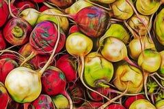 Slut upp röda rädisor på marknadsställning royaltyfri foto