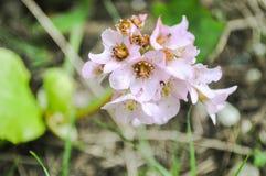 Slut upp rosa blommor Royaltyfri Bild
