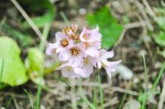 Slut upp rosa blommor Arkivbilder