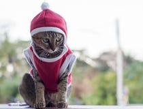 Slut upp Santa Ordinary Cat Arkivbilder