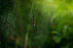 Slut upp spindel i natur Royaltyfri Bild