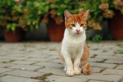 Slut upp ståenden av den röda kattungen royaltyfria foton